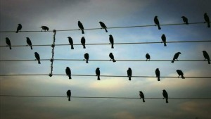 Birds on the Wires, la música de una fotografía